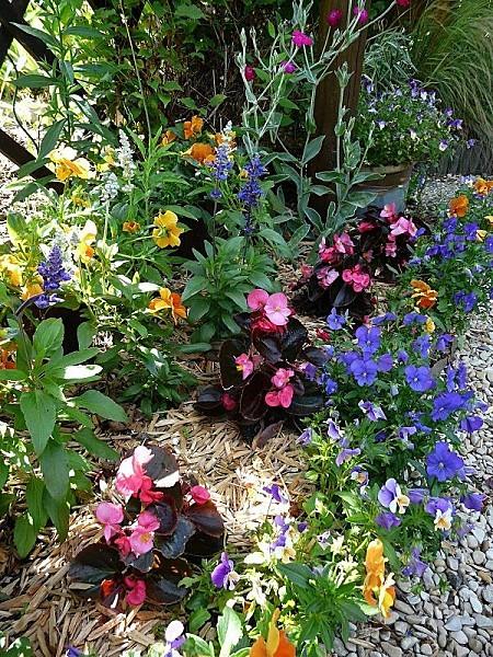 Massif-begonia-pensees-sauge-f.-8-8-06-11-016.jpg