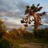 baobab au coucher du soleil.JPG