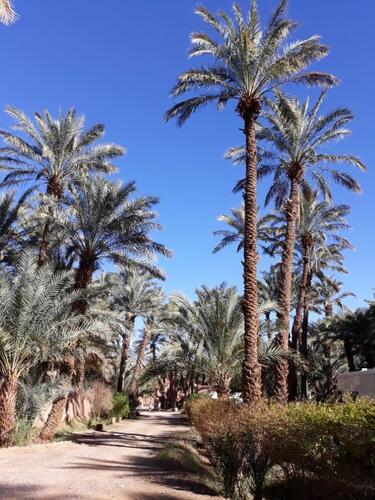 Les palmiers procurent une ombre bienfaitrice