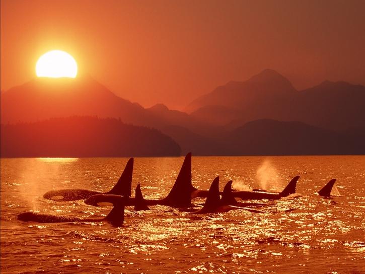 Les Habitants de l'Océan: 25 images