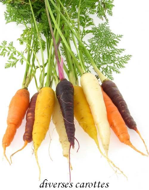 Vertus des Plantes Médicinales : CAROTTE