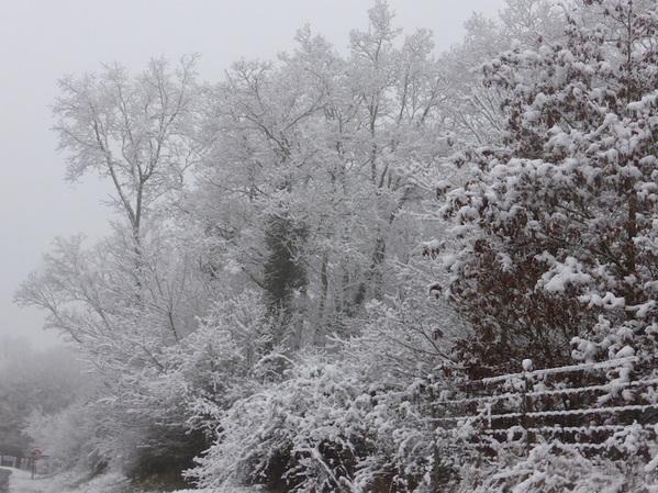 - Le monde en blanc et noir de la neige -
