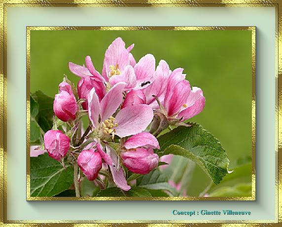 Superbes arbres en fleurs...