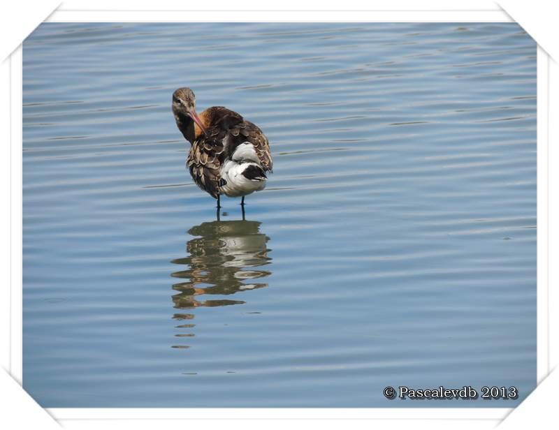 Pause ornithologique estivale au Teich - 9/12
