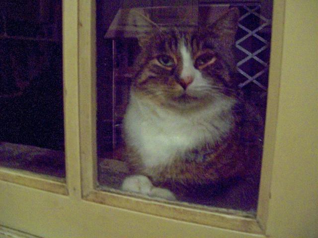 Fusée à la fenêtre {regardez ces patounes ...}
