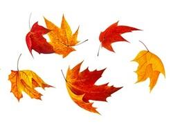 Ballet de feuilles mortes.