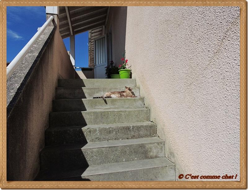 Bronzette dans l'escalier - 2