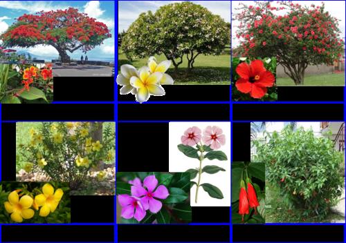 carte de nomenclature fleurs tropicales écol'o