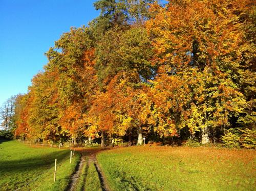 Bel automne à tous