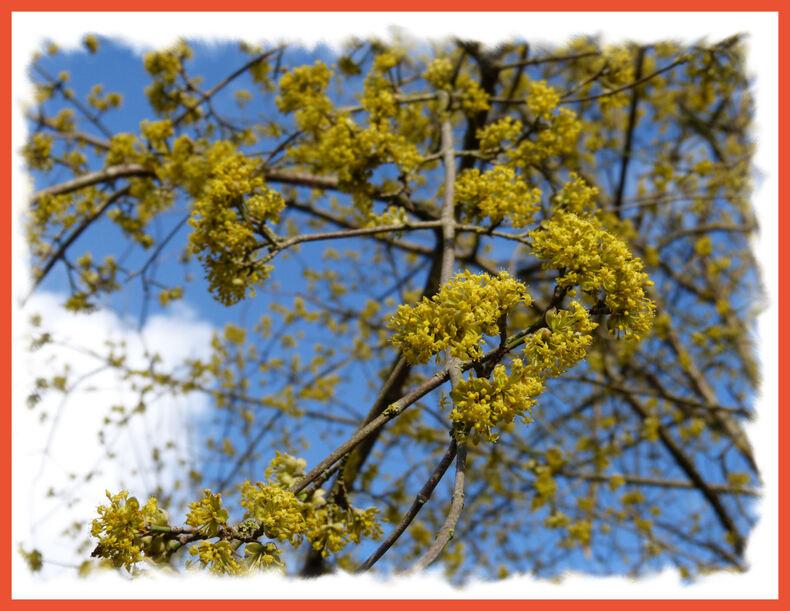 Le printemps .....