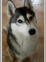 Janouska (16 mois)