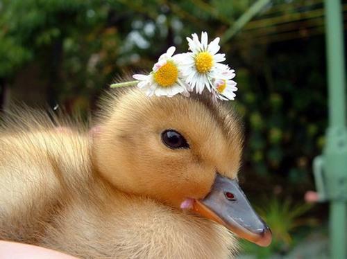 D'autres animaux-tendresse avec des fleurs