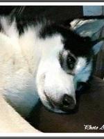 Laïdja (1,5 an)