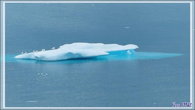 29 août 2016 : nous naviguons dans la Mer de Beaufort, 68° 30' Nord, 100° Ouest - Rencontre avec de la banquise en débâcle - Nunavut - Canada
