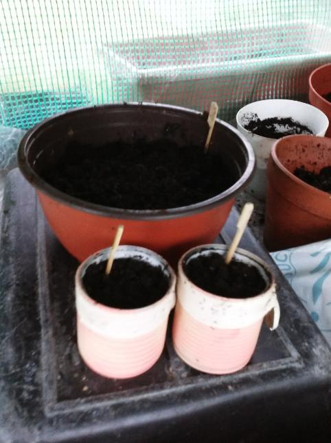 Premiers semis !/First seedling