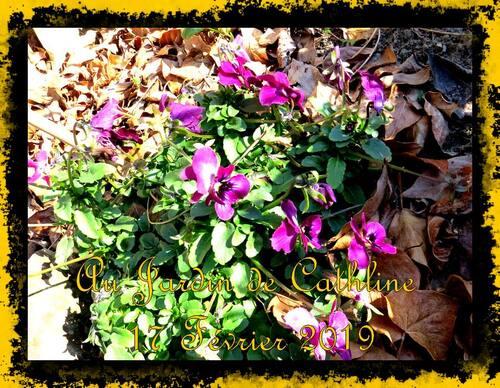 Quelques fleurs en Février
