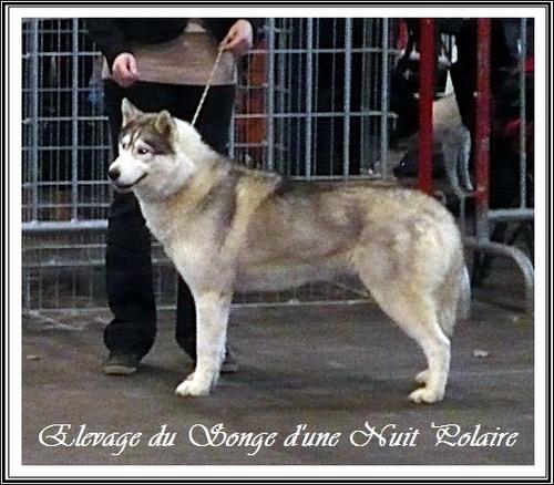 Hindy Exposition canine de Toulouse (23 février 2014)