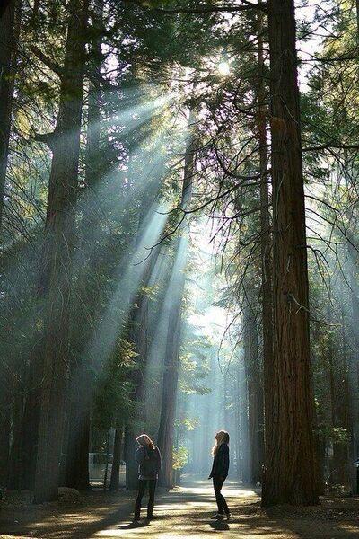 Une simple marche en forêt