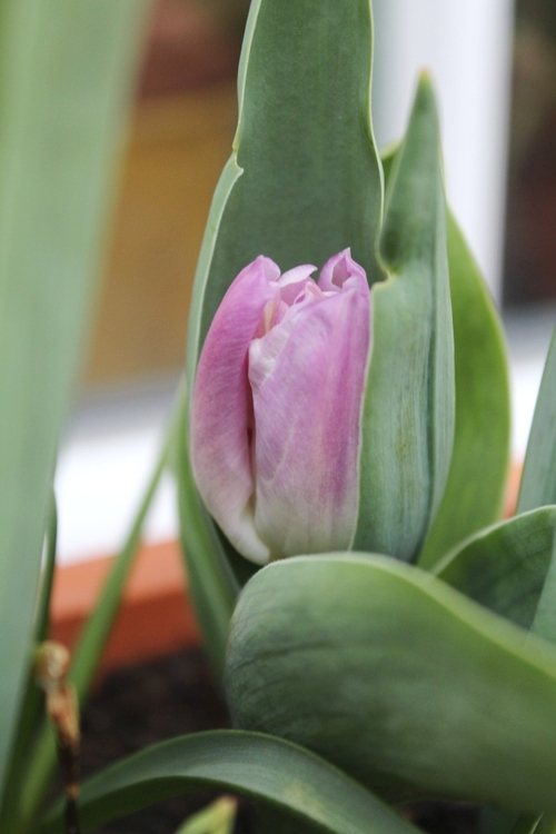 Le printemps à mes fenêtres