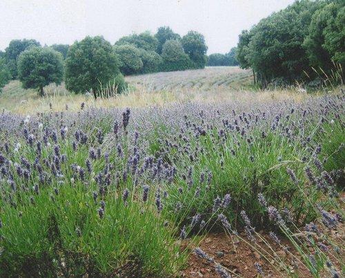 Info producteur : quelques clichés des Jardins du Salvet...