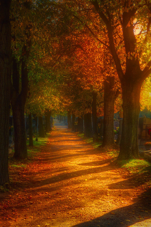 L'automne capturé par nos photographes du monde