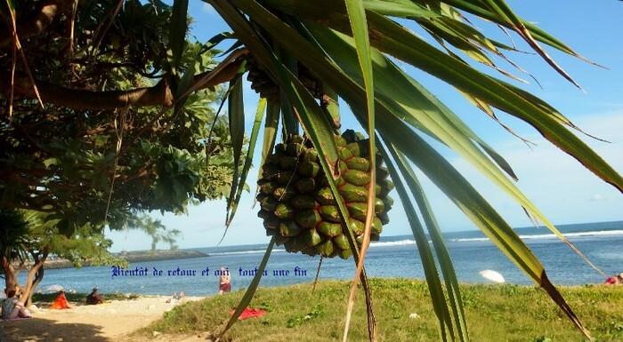 Balade Dans L'Île De La Reunion