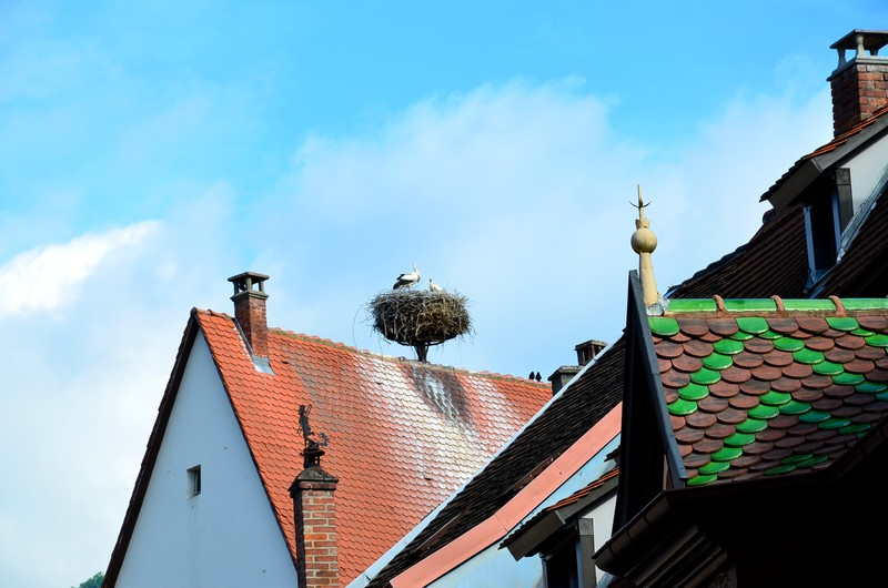 ribeauvillé sortie aux 3 châteaux schnoebelen