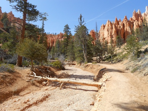 Jour 16 - Bryce Canyon