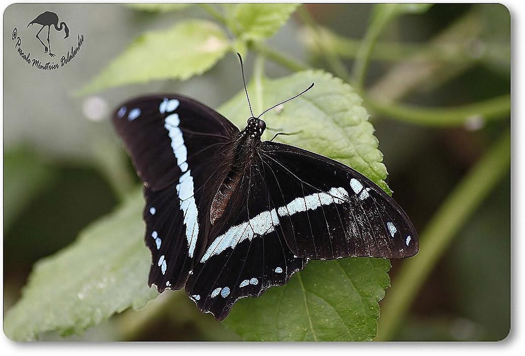 Papillon exotique non identifié...