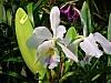 Orchidée 09