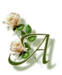 La rose du samedi n° 13
