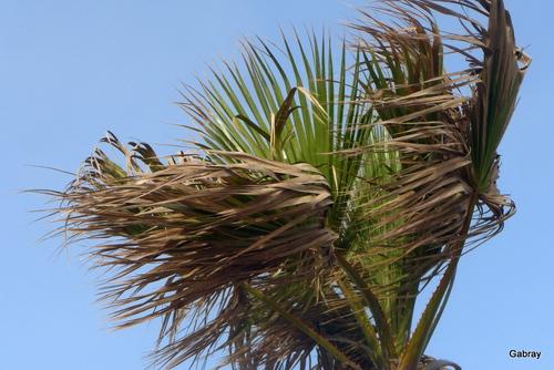 Un beau palmier