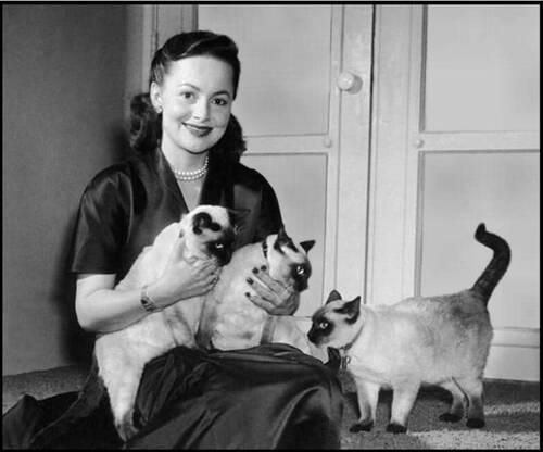 04 - Des femmes, des chats, portraits