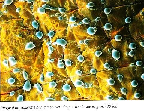 Le monde microscopique 6