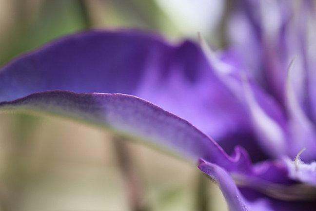En-vert-et-bleu 2003