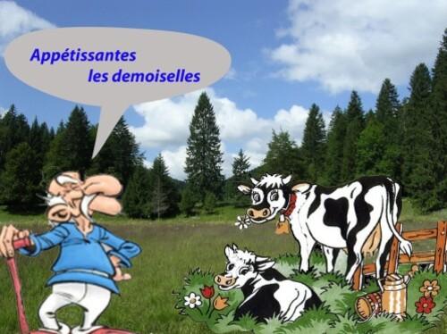 vache-copie-1.jpg