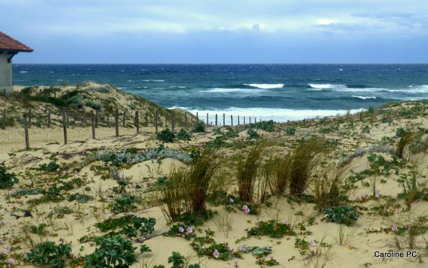 *Bonne fête des mères, les fleurs sur les dunes*