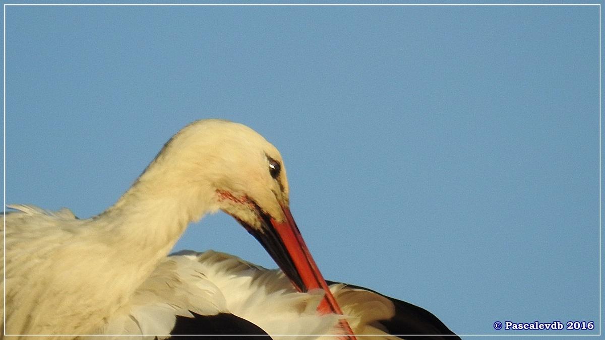 Réserve ornitho du Teich - Décembre 2016 - 11/13