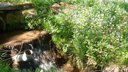le jardin avant , pendant et après la sécheresse