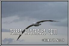 Montage audiovisuel sur les Terres Australes de 15 minutes