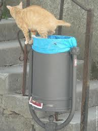 Image du chat propre