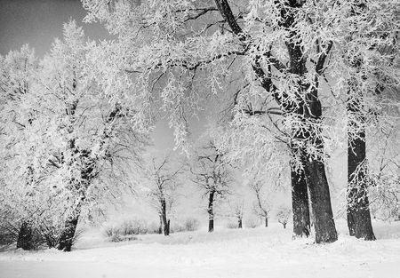 -Mario Rigoni STERN - Sentiers sous la neige