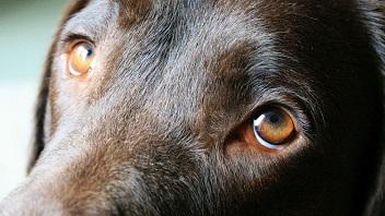 Je tiens à mon chien comme à la prunelle de mes yeux !!!