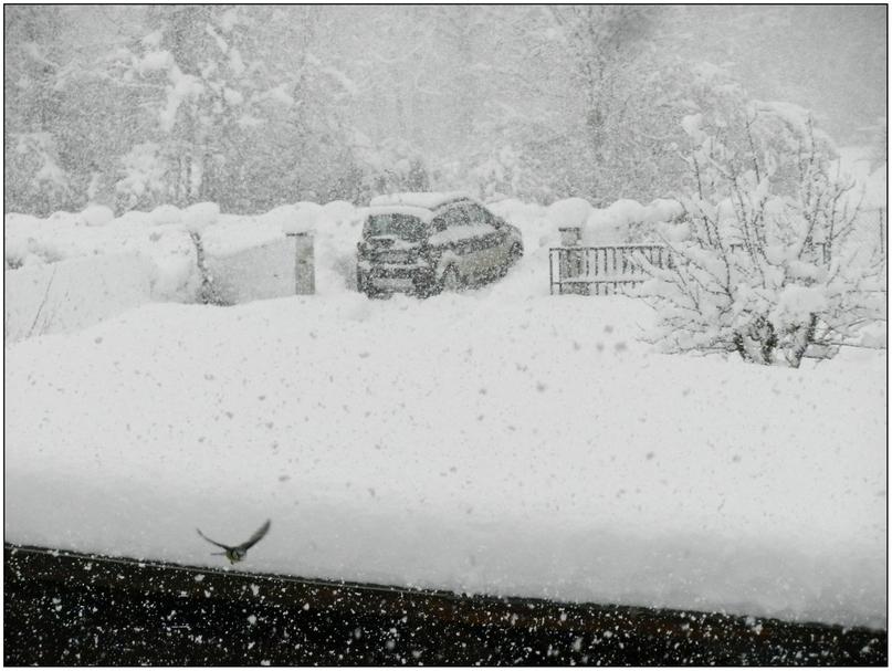 Tempête de neige 01-02-2015