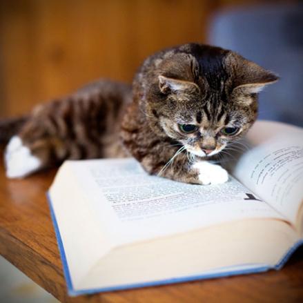 05 - Des chats  et des gros livres