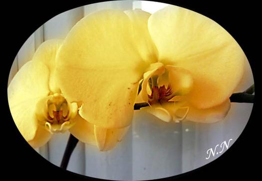 Histoire d'orchidée