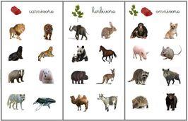 Carnivores, herbivores ou omnivores
