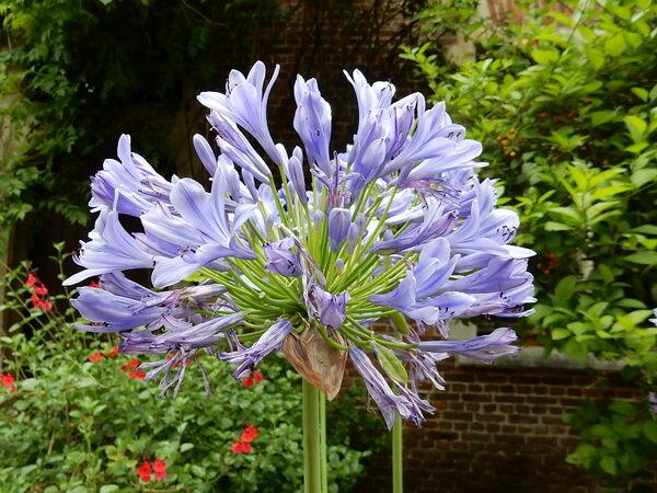 Floralie au Jardin botanique de Meise