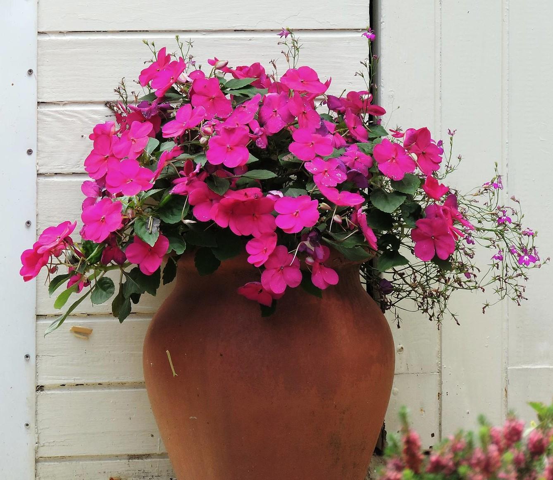 Fleur en pot rosier en pot fleur en pot fleurs en pot for Stephanotis exterieur