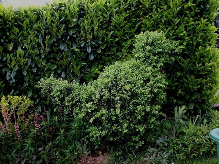 L'art topiaire , l'art de décoration du jardin